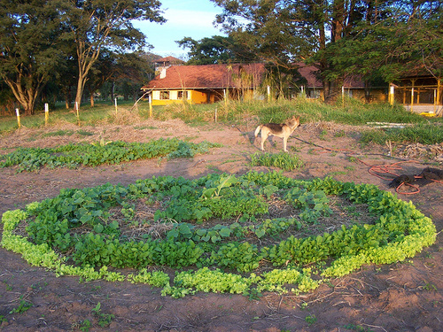 zöldségeskert-kialakítása