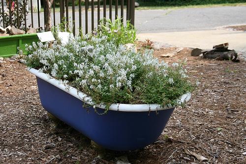 Fürdőkádas-kertészkedés