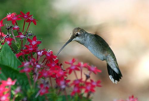 madarak-virágok
