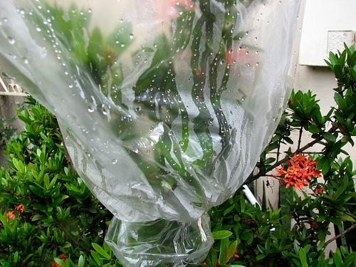 Növények-párologtatása