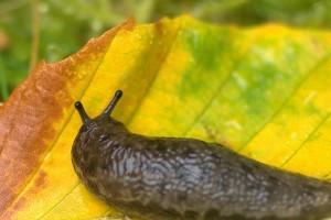 Készüljünk fel az őszi rovar- és gyomirtásra!  - 1. rész