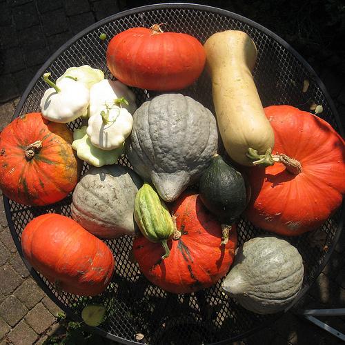 Jövő-év-zöldségek