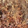 Készüljünk fel az őszi rovar- és gyomirtásra!  - 2. rész