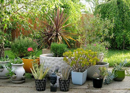 Figyelem-felkeltő-növények