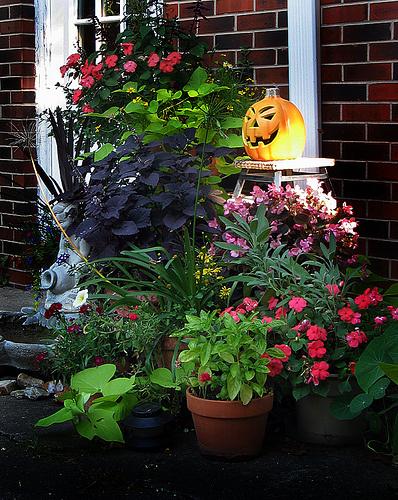 Színezzünk-növényekkel