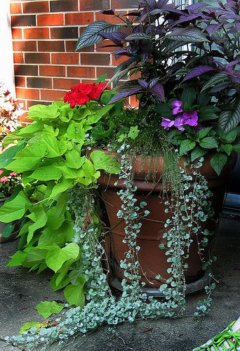 Mozgatható-cserepes-virágok