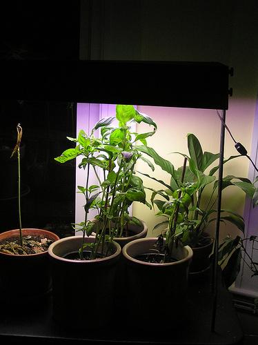 Beltéri-növény-termesztés
