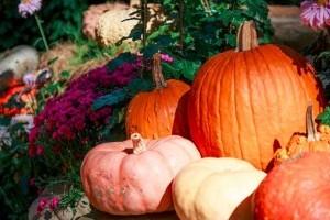 Kertészeti tanácsok októberre