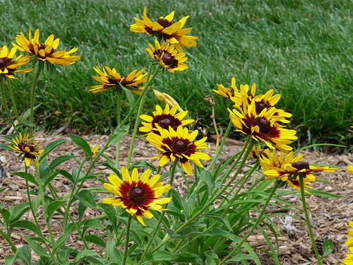 Nyári-virágok