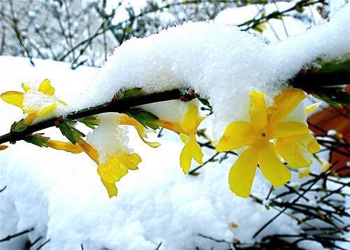 Téli-virágok