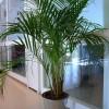 Milyen magas szobanövényeket vásároljunk?