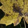 Novemberi kerti teendők - 2. rész