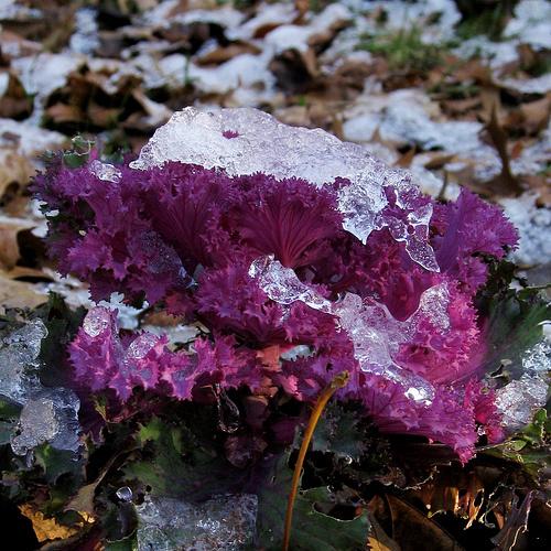 falevelek-hó-komposztláda