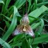 Borzongjunk együtt az orchideákkal! - Nemzetközi Orchidea- és Bromélia Kiállítás!