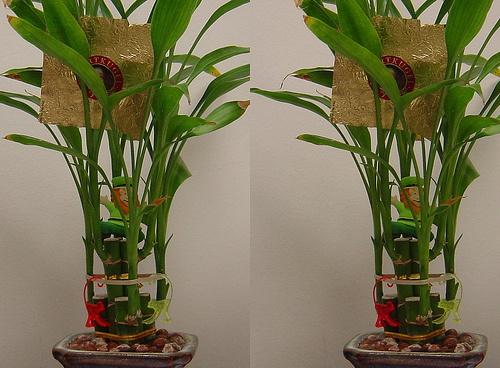Árnyéktűrő-növények