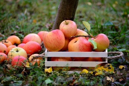 apple-3695288_1280