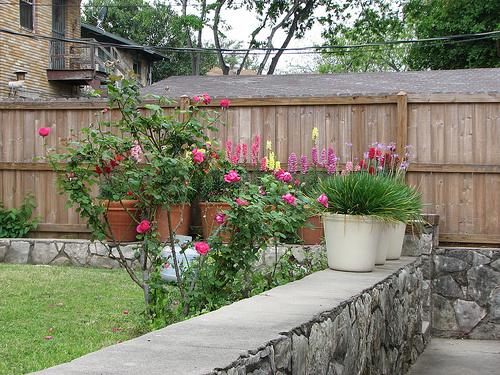 Ősz-virágzó-kert