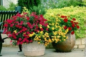 Legyen színes az őszi virágoskertünk is!