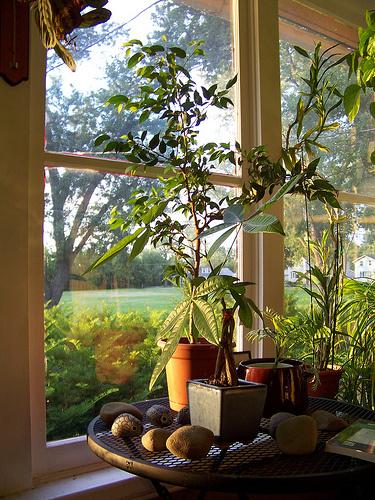 Leveles-növények