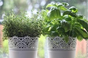 6 mutatós ötlet beltéri fűszerkerthez