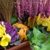 Őszi virágládák az ablakban