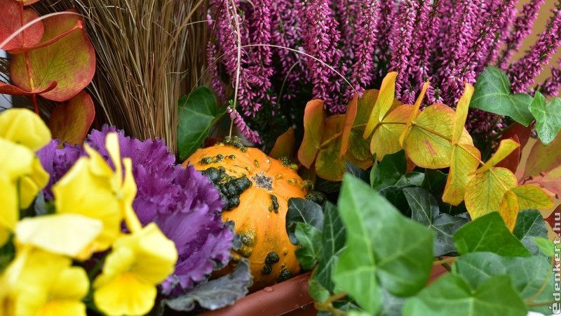 Őszi virágládák beültetéséhez néhány tipp