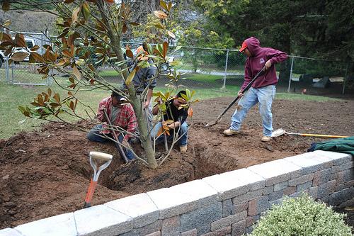 Faültetés-ásás