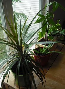 Légtisztító-szobanövények