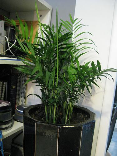 Levegőt-tisztító-szobanövények