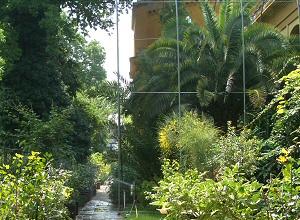 Használati utasítás szabadba ültetett pálmákhoz