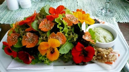 salta-virágok-vadon-termő-növények