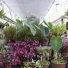 A növényvásárlás tíz buktatója - 1. rész