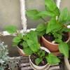 A növényvásárlás tíz buktatója - 2. rész