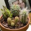 Mini kaktuszkert készítése!