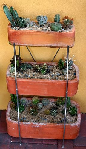 sivatag-cserpben-kaktuszok
