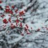 Kertészkedési tippek decemberre