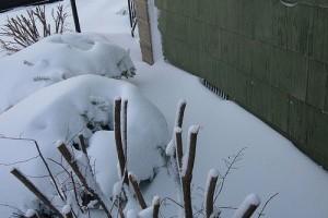Decemberi kertészkedés
