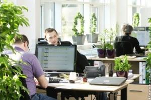 Az irodai növények 10 legjobbja - 2. rész
