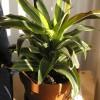 Tippek a növények teleltetéséhez