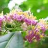 Virágzó bokrok, cserjék és fák