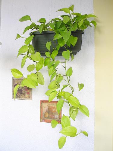 Futónövények-gondozása