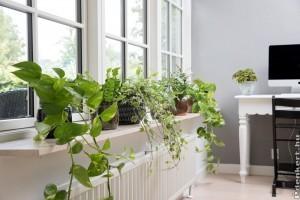 Beltéri futónövények gondozása