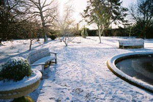 Mesés szépségek a téli kertben