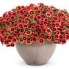 2011 új növényei