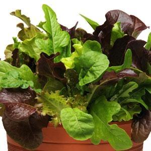 salata-kollekcio-egyszeru