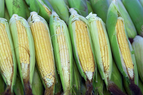 kukorica-kalasz