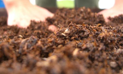 egeszseges-talaj