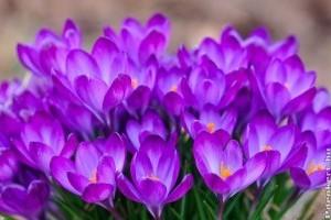 A világ legdrágább és legritkább virágai