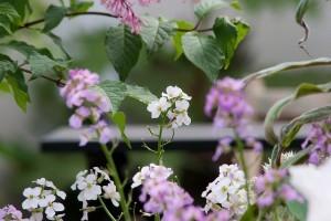 Nyolc kertművészeti tipp