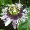 Világunk 10 legcsodálatosabb virága